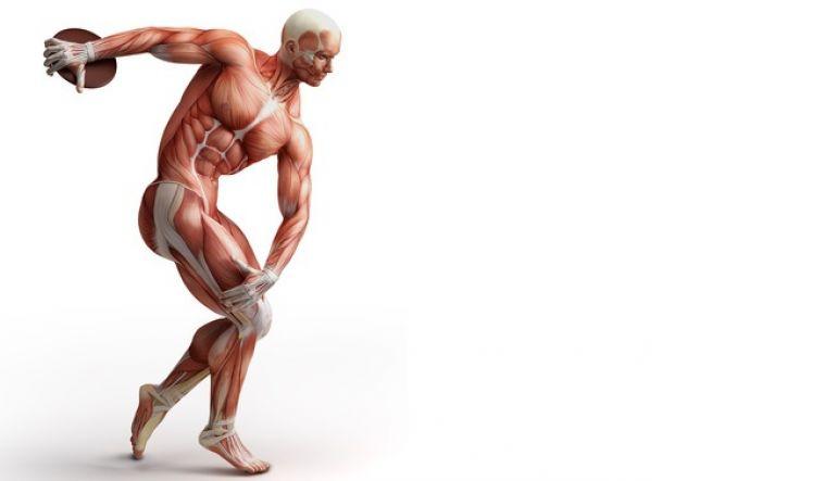 BODY IP - Dein Personal Trainer für Krafttraining und Muskelaufbau